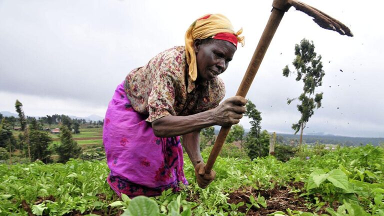 Lantbrukare i Kenya.
