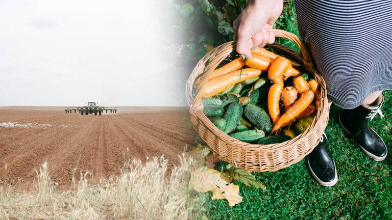 Storskaligt och småskaligt jordbruk